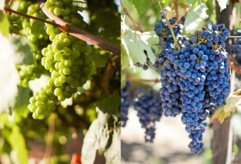 Drugi krug edukacija za zanimanja: vinar i vinogradar